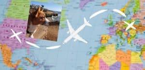 Flugreise mit Hund von Europa in die USA