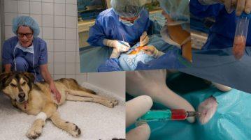 Stammzelltherapie bei Hunden