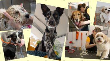 Hunde im Fellsalon