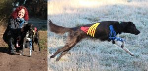 Links: Katja Bredlau-Morich mit Hund, rechts: ein getapter Hund rennt
