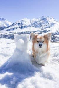 lecorgi mit Schneecorgi in den Bergen