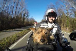 Hunde auf Motorrad