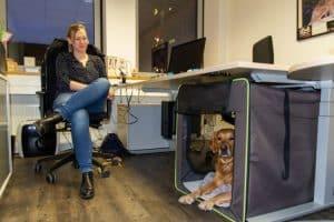 """Goldie Watson in seiner """"Büro-Höhle"""""""