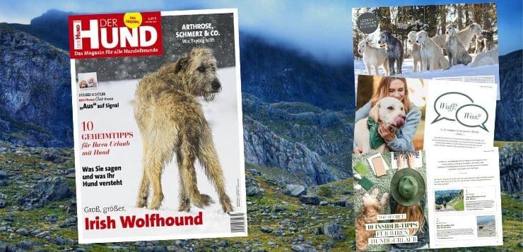 Das Cover der Ausgabe 3/20 von DER HUND