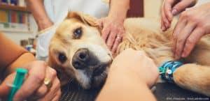 Tierarztnotdienst wird teurer