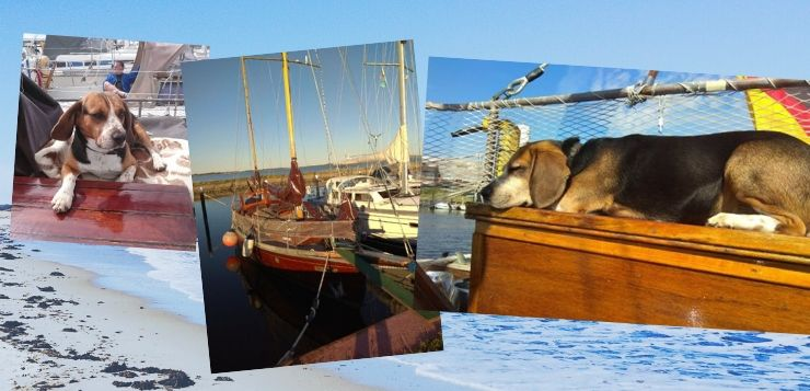 Beagle an Bord: Porthos segelt mit seinen Menschen übers Meer.