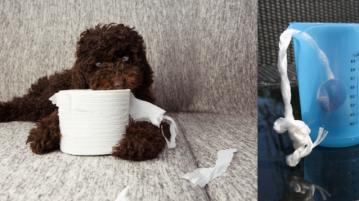 Hundespielzeug aus Klopapier-Rollen