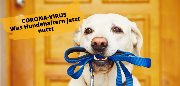 Corona Special – Was Hundehaltern nutzt