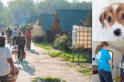 Tierschutzarbeit in Rumänien
