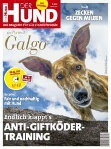 Das Cover von DER HUND, Ausgabe 7/20 zeigt einen Galgo, der von oben den Betrachter anschaut