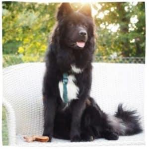 großer Elo sitzt in Garten auf Sofa