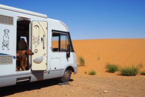 Zwei Ridgbacks schauen aus der offenen Tür eines Wohnmobils, das in einer Wüste steht