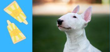 Sonnencreme für Hunde – darum ist sie nötig!