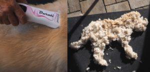Vorher- Nachher -Bild mit Hundeschermaschine und Fellmodell