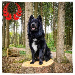 Elo Keano sitzt im Wald auf einem Baumstamm