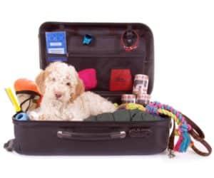 Hund liegt in offenem Koffer, Hundebedarf um ihn herum