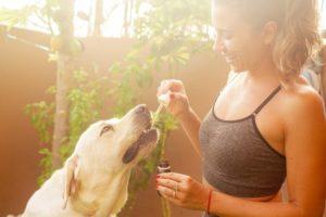 Frau mit Labrador Retriever