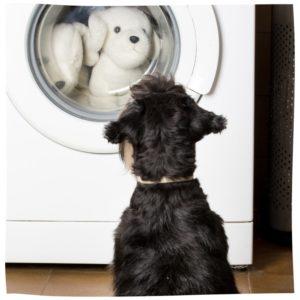 Hund sitzt vor Waschmaschine, Rücken zur Kamera