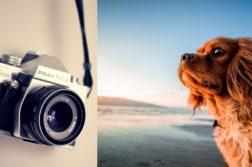 Fotokamera und Hund am Wasser