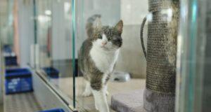 Katze im Katzenhaus des Tierheim Berlin