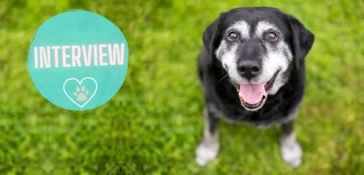 Ältere Hunde impfen: Experten-Interview