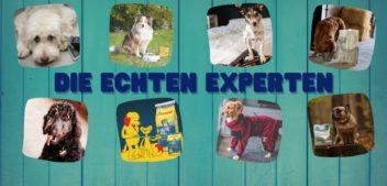 Tierische Empfehlungen 2020/2021: Hier kommen Hunde zu Wort