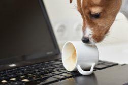 Hund hat Kaffeetasse auf Laptop umgestoßen