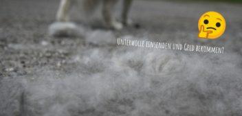 Revolutioniert Hundehaar bald die Modebranche?