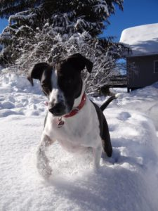 Hündin im Schnee