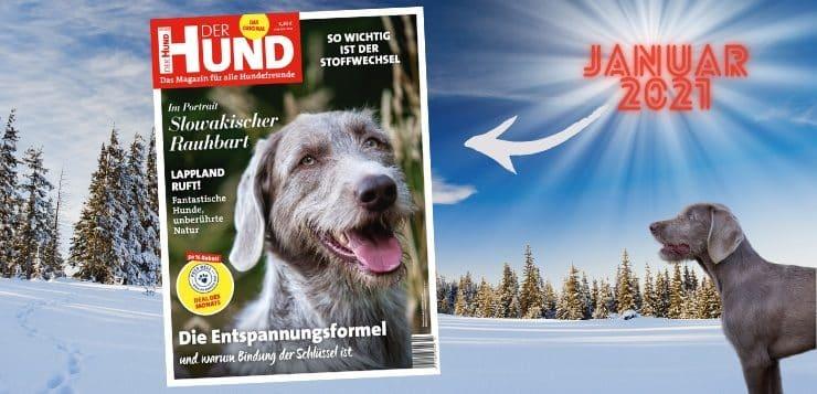 Neues Jahr, neues Heft! Die Januar-Ausgabe 2021