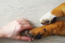 Eine Hand umschließt leicht eine Hundepfote.