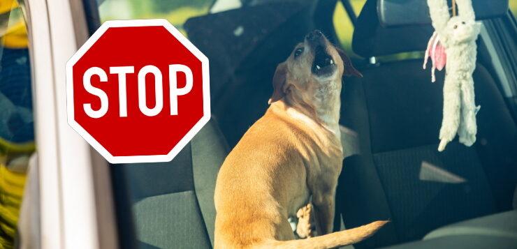 Hund in verschlossenem Auto