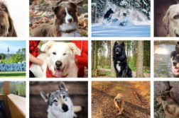 Gewinner-Hundefotos 2020
