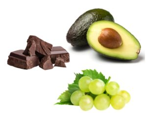 Schokolade, Avocado und Trauben gehören zu den für Hunde giftigen Lebensmitteln.