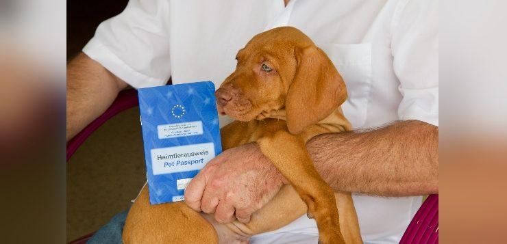 Welpe mit seinem Heimtierausweis beim Tierarzt