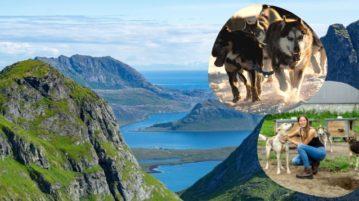 Schlittenhunde, Hoher Norden
