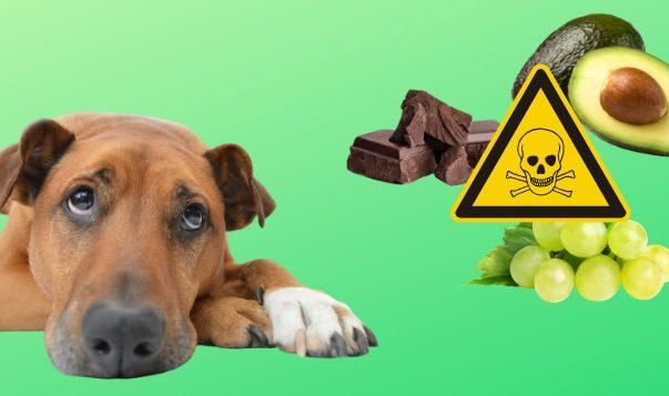 Vergiftung beim Hund