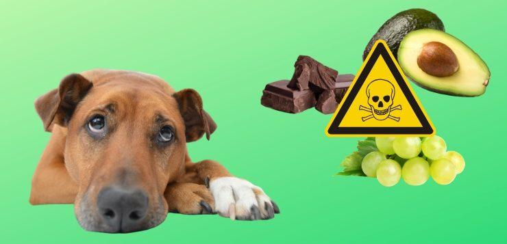 Vergiftung beim Hund: Gifte, Symptome, Erste Hilfe