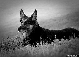 Den trauer hund um Den Hund