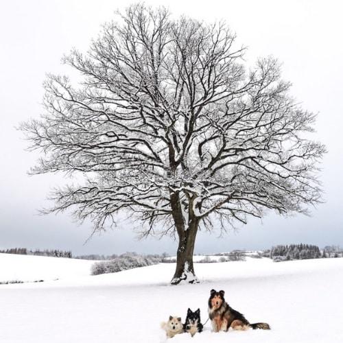 3 Hunde im Schnee vor einem Baum