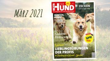 Das Cover der DER HUND Ausgabe im März 2021 zieren rennende Golden Retriever