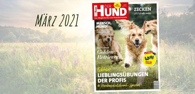 Jetzt neu: Die März-Ausgabe 2021