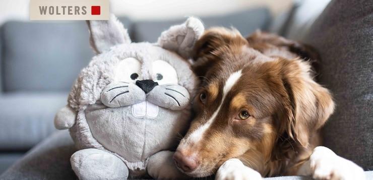 Gewinne ein Hundebett plus Spielzeug von WOLTERS!