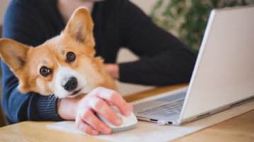 ein Corgi sitzt mit seinem Halter am Tisch, der Mann ist am Laptop.