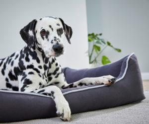 WOLTERS Hundebett