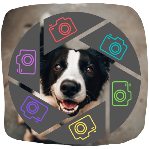 Comedy Pet Photography Awards 2021