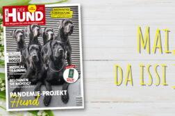 Im Mai 2021 zieren 6 sitzende und stehende Deutsche Doggen das Cover von DER HUND