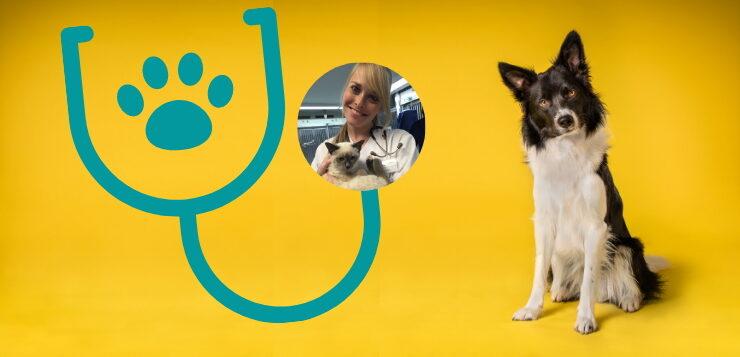 """Spezialisierung bei Tierärzten: Was ist ein """"Diplomate""""?"""
