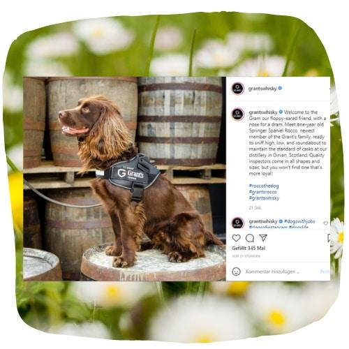 Schnüffelhund Rocco aus Schottland