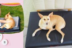 DER HUND Angetestet Waffa Hundekissen